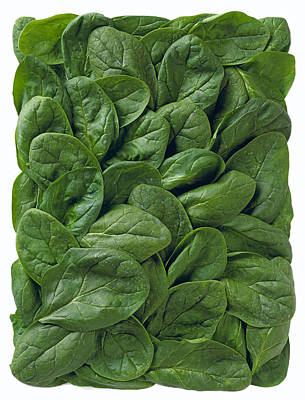 Lettuce Photograph - Agriculture - Spinach Leaves Arranged by Ed Young