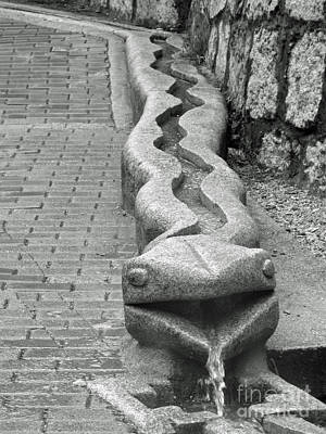 Year Of The Snake Photograph - Aguas Calientes Snake by April Antonia