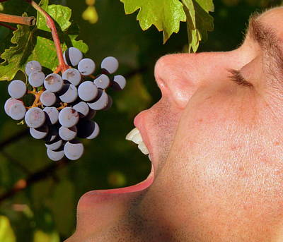 Photograph - Ahh Wine Grapes by Jeff Lowe
