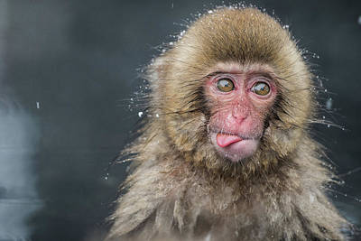 Monkey Wall Art - Photograph - (a???i??a???)i???i???i???i???i??? by Takeshi Marumoto