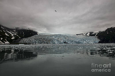 Photograph - Aialik Glacier Alaska by David Arment