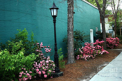 Garden Landscape Of Spring Photograph - Aiken South Carolina Garden Street Scene by Kathy Fornal