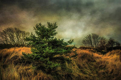 Art Print featuring the photograph Ainsdale Dunes In Winter by Brian Tarr