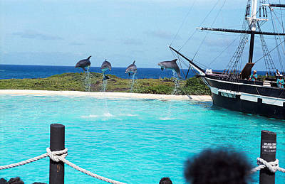 Photograph - Airborne Dolphins by Robert Meyers-Lussier