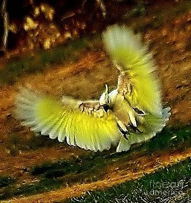 Airborne Landing Original