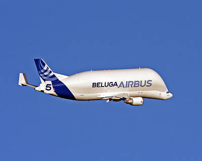 Photograph - Airbus Beluga by Paul Scoullar