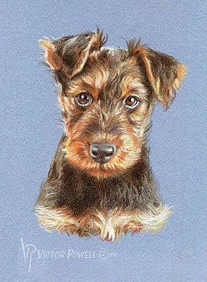 Puppies Mixed Media - Airedale Terrier Puppy Portrait by Victor Powell