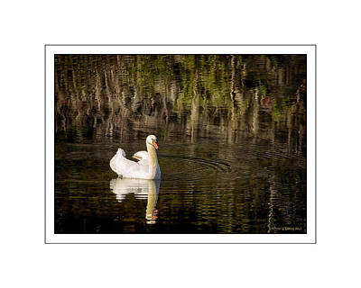 Photograph - Airley Duck by Denis Lemay
