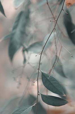 Photograph - Airy Dreams by Jenny Rainbow