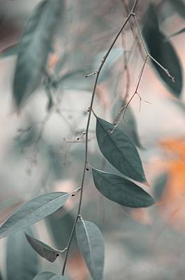 Photograph - Airy Memories by Jenny Rainbow