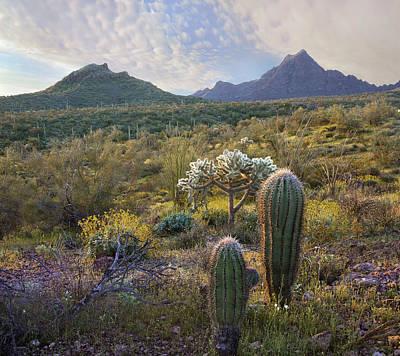 Ajo Mountain In Arizona Art Print by Tim Fitzharris