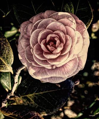 Photograph - Alabama State Capitol Camellia - Vintage 8 by Lesa Fine