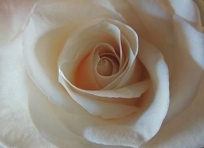 Photograph - Alabaster Rose by Regina Arnold