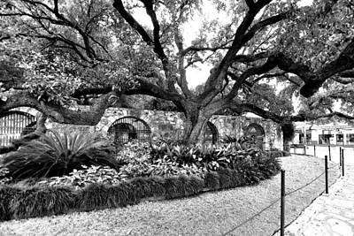 Print featuring the photograph Alamo Grounds by Ricardo J Ruiz de Porras