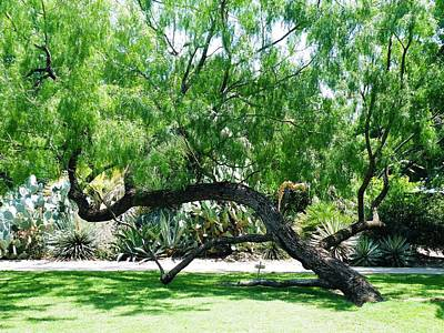 Photograph - Alamo Twisted Tree by The GYPSY