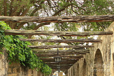 Photograph - Alamo Walkway by Carol Groenen