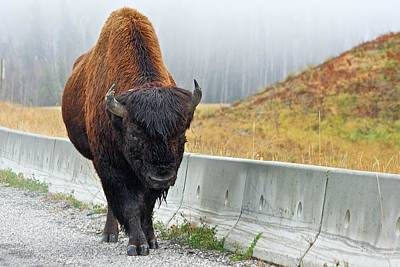 Alaska Hwy Bison Art Print