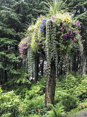 Photograph - Alaska Rainforest Tree Garden by Karen Zuk Rosenblatt