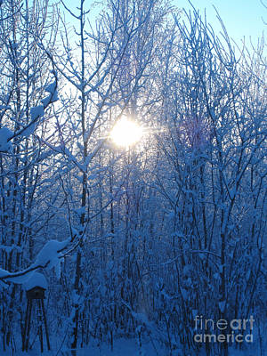 Photograph - Alaska Sunrise Illuminating Through Birches And Willows by Elizabeth Stedman