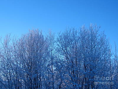 Photograph - Alaska Sunrise Lighting Willows In Winter by Elizabeth Stedman