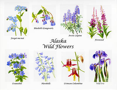 Lupine Painting - Alaska Wild Flower Poster by Sharon Freeman