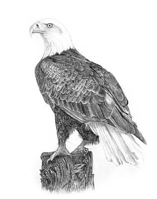Black And White Eagle Drawing - Alaskan Bald Eagle by Parampreet Grewal