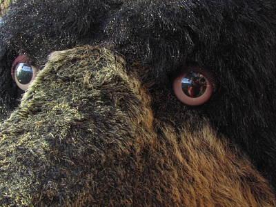 Art Print featuring the photograph Alaskan Bear by Jennifer Wheatley Wolf