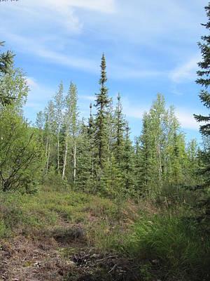 Photograph - Alaskan Forest by Lucinda VanVleck