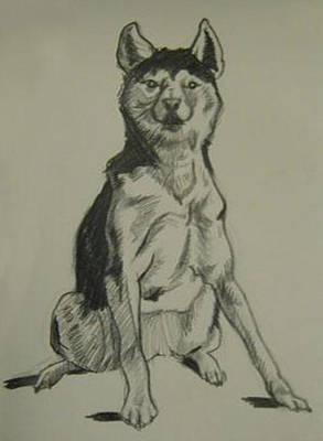 Wall Art - Drawing - Alaskan Husky by Kerrie B Wrye