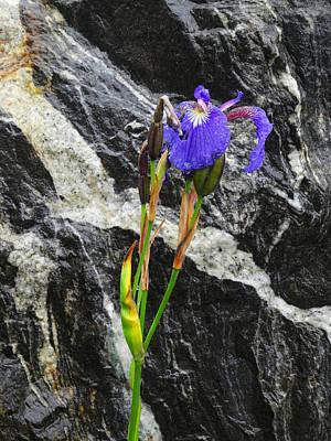 Photograph - Alaskan Iris by Jacqueline  DiAnne Wasson