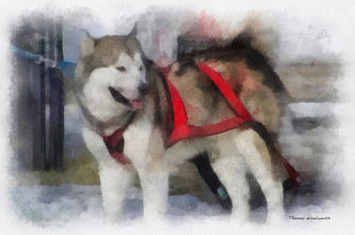 Dogs In Snow Digital Art - Alaskan Malamute Photo Art 01 by Thomas Woolworth
