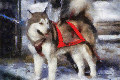 Dogs In Snow Digital Art - Alaskan Malamute Photo Art 02 by Thomas Woolworth