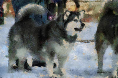 Dogs In Snow Digital Art - Alaskan Malamute Photo Art 03 by Thomas Woolworth