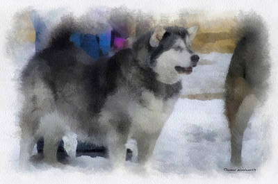 Dogs In Snow Digital Art - Alaskan Malamute Photo Art 04 by Thomas Woolworth