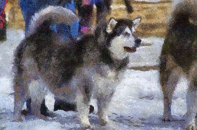 Dogs In Snow Digital Art - Alaskan Malamute Photo Art 05 by Thomas Woolworth