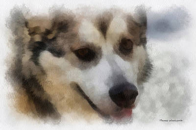 Dogs In Snow Digital Art - Alaskan Malamute Photo Art 08 by Thomas Woolworth