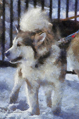Dogs In Snow Digital Art - Alaskan Malamute Photo Art 09 by Thomas Woolworth