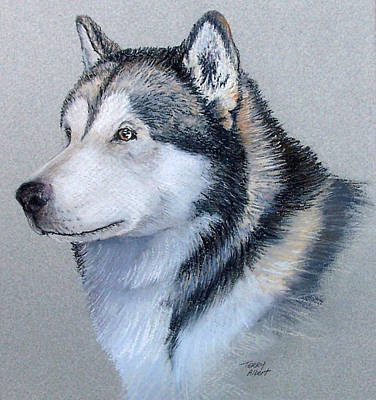 Painting - Alaskan Malamute by Terry Albert