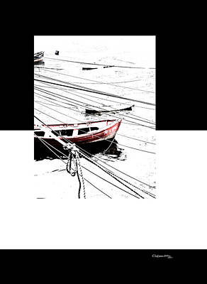Digital Art - Albatros by Xoanxo Cespon
