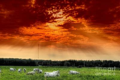 Art Print featuring the photograph Alberta Canada Cattle Herd Hdr Sky Clouds Forest by Paul Fearn