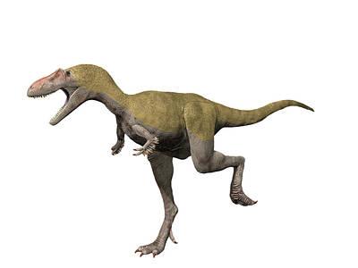 Albertosaurus Photograph - Albertosaurus Is A Theropod Dinosaur by Nobumichi Tamura