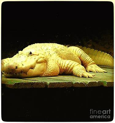 Photograph - Albino Alligator  by Saundra Myles