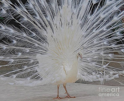 Digital Art - Albino Peacock by Ray Shiu