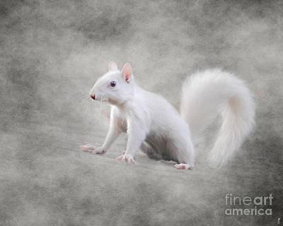 Good Luck Photograph - Albino Squirrel by Jai Johnson