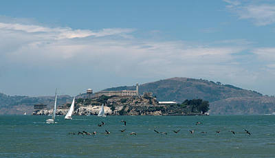 Alcatraz With Pelicans Art Print