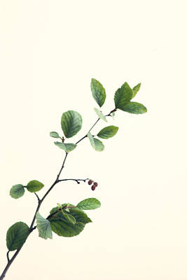 Photograph - Alder I by Michael Moschogianis