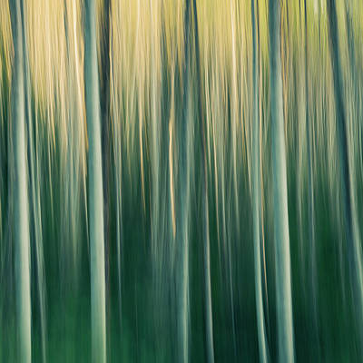 Photograph - Alder Tree Forest Abstract, Blurred by Mint Images - Paul Edmondson