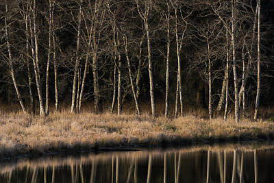 Alders Reflect In Water On A Winter Art Print by Robert L. Potts
