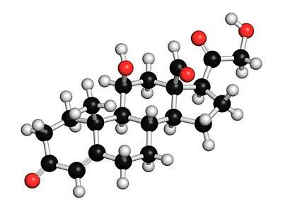 Aldosterone Mineralocorticoid Hormone Art Print