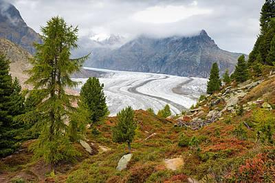 Photograph - Aletsch Forest And Aletsch Glacier Swiss Alps Switzerland by Matthias Hauser